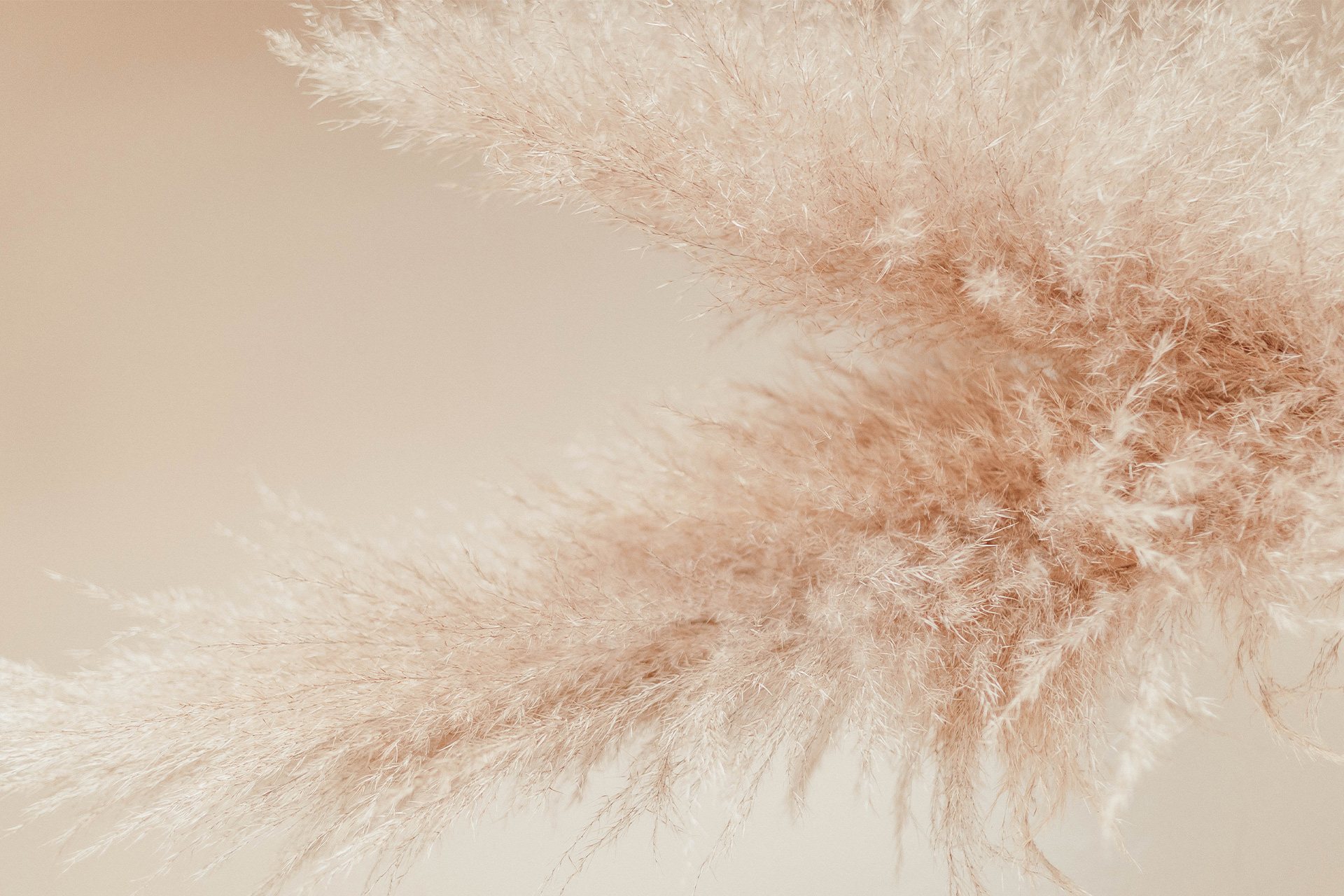 Beige background with pampas grass
